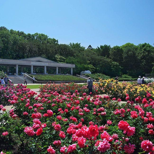 調香体験やバラにちなんだマルシェも!神代植物公園「春のバラフェスタ」